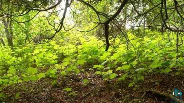 xxxxx White Pine Tr Lot 3 Brickyard Creek Iii