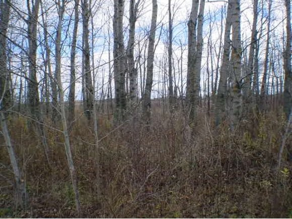 N5753 VALLEY RD VALLEY RD Cecil, WI 54111 - MLS #: 50110018