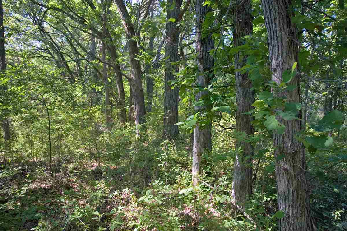 6.14 Ac County Road A, New Chester, WI 53936