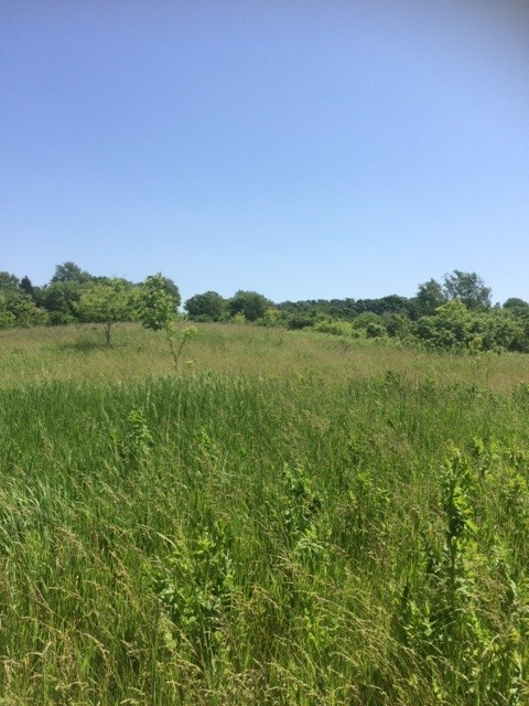 35.55 Ac Blue Mounds Tr, Vermont, WI 53515