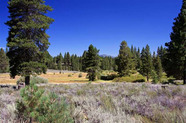 Additional photo for property listing at 13185 Snowshoe Thompson  Truckee, California 96161 Estados Unidos