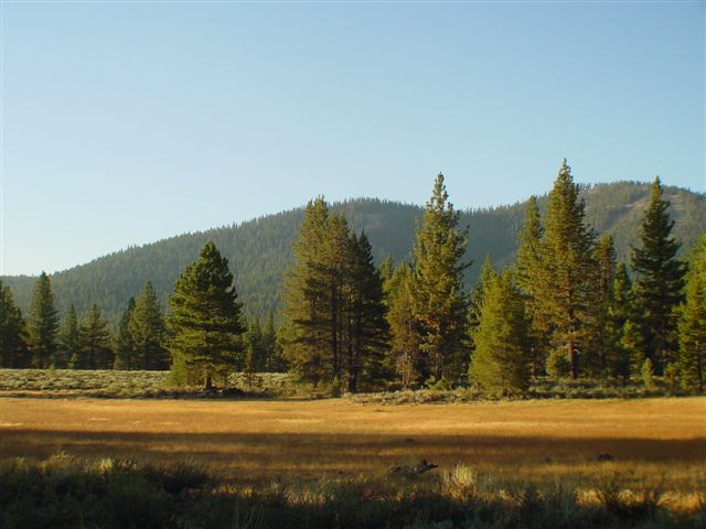 Residential Lot for Active at 564 Stewart McKay Truckee, California 96161 United States