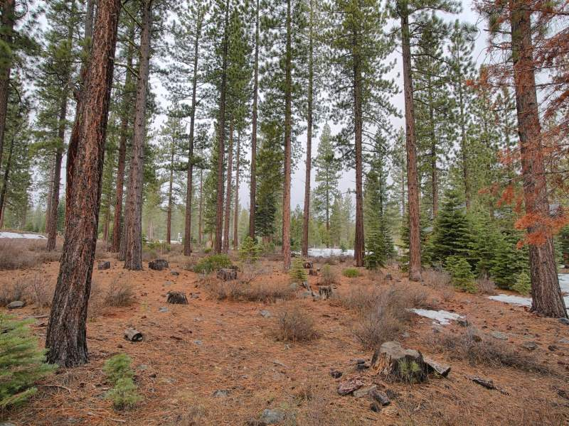Additional photo for property listing at 9404 Heartwood Drive  Truckee, California 96161 United States