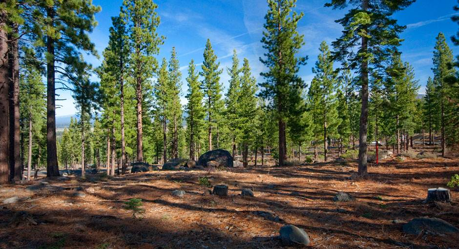Terreno por un Venta en 8219 Fallen Leaf Way Truckee, California 96161 Estados Unidos
