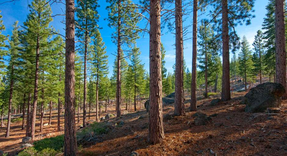 Additional photo for property listing at 8219 Fallen Leaf Way  Truckee, California 96161 United States