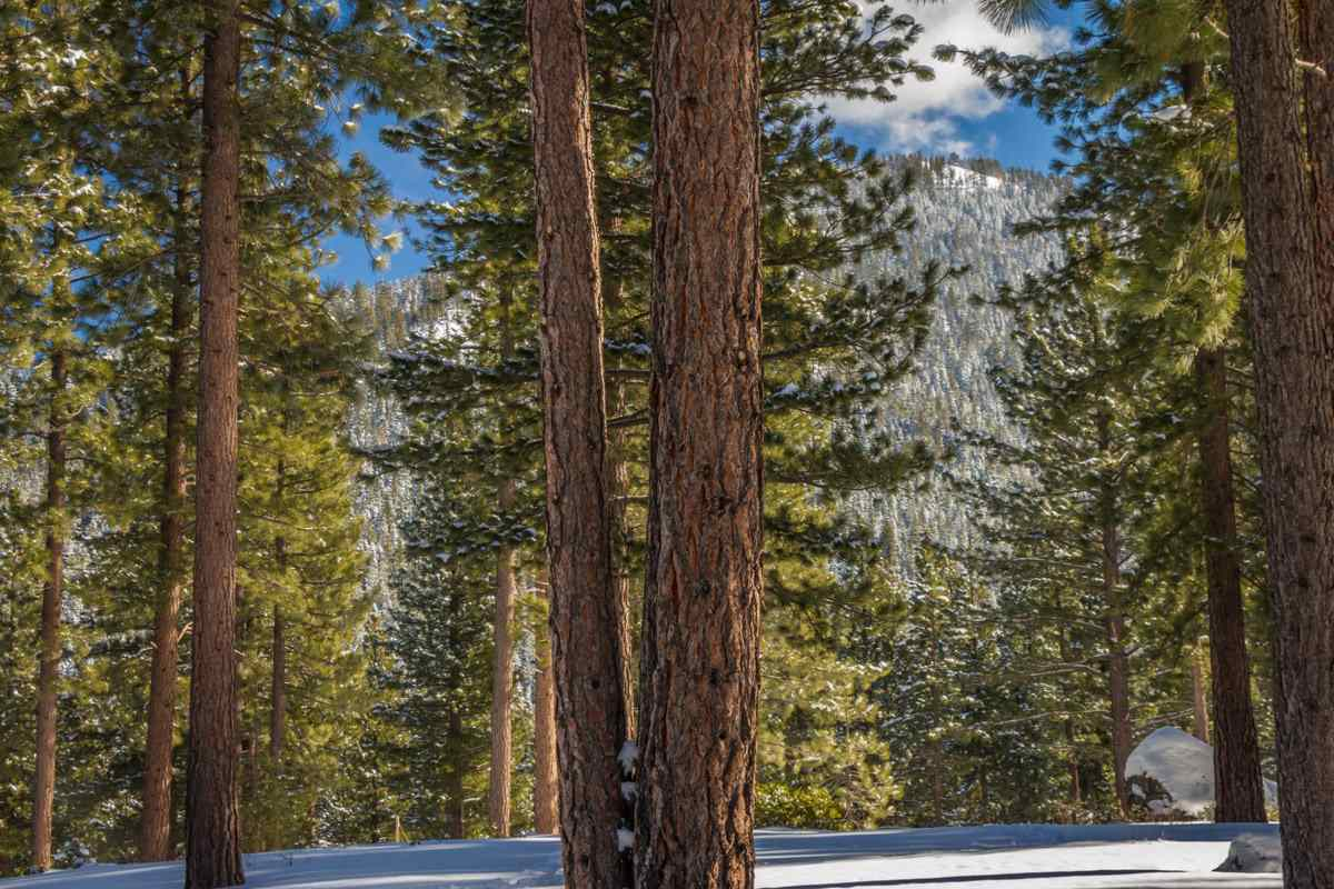 Additional photo for property listing at 10286 Hermitage Court Truckee, California United States