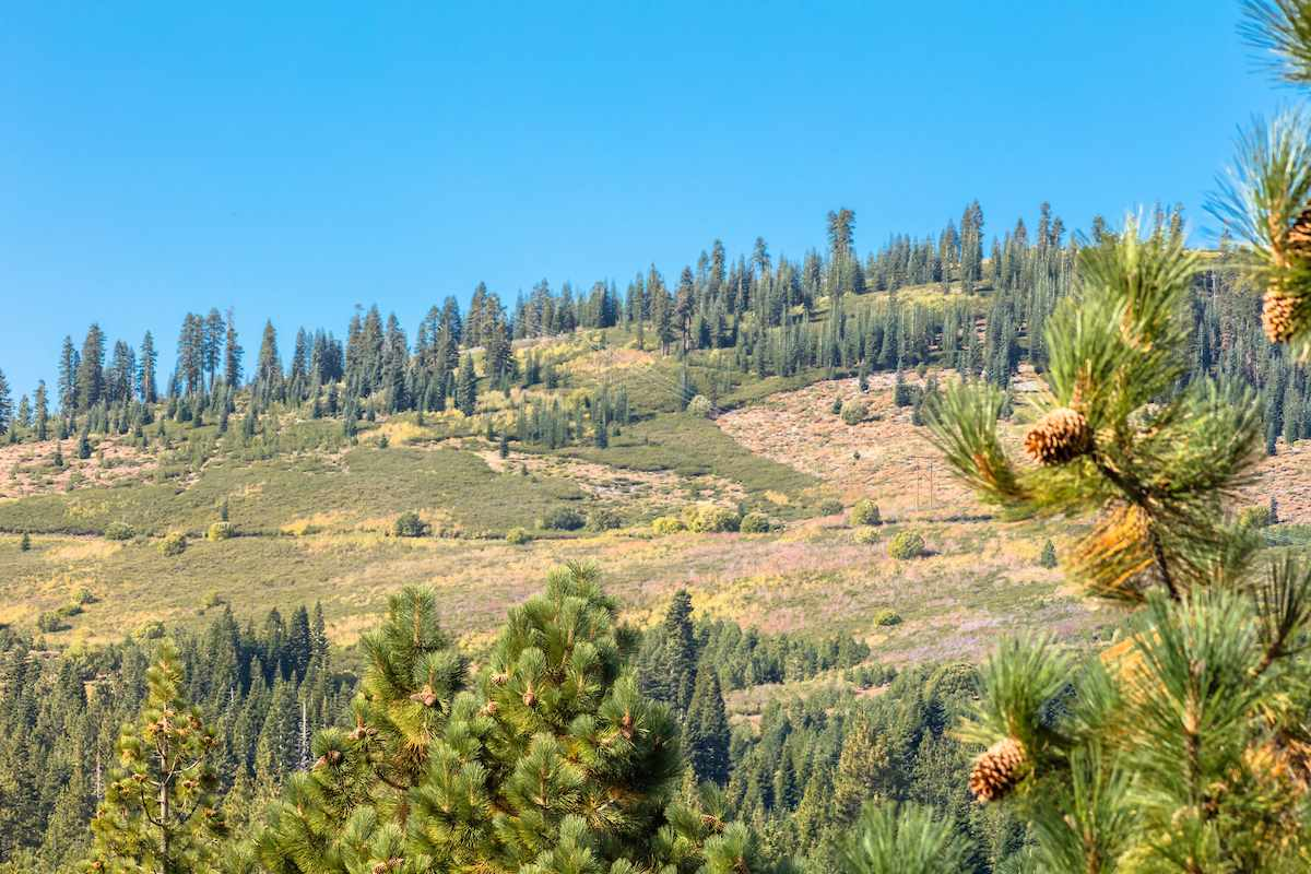 Additional photo for property listing at 15267 Wolfgang Road Truckee, California 96161 United States