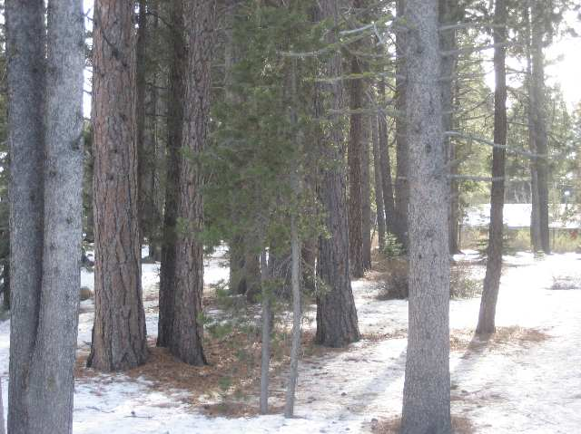 Additional photo for property listing at 10455 Alder Creek Road 10455 Alder Creek Road Truckee, California 96161 United States