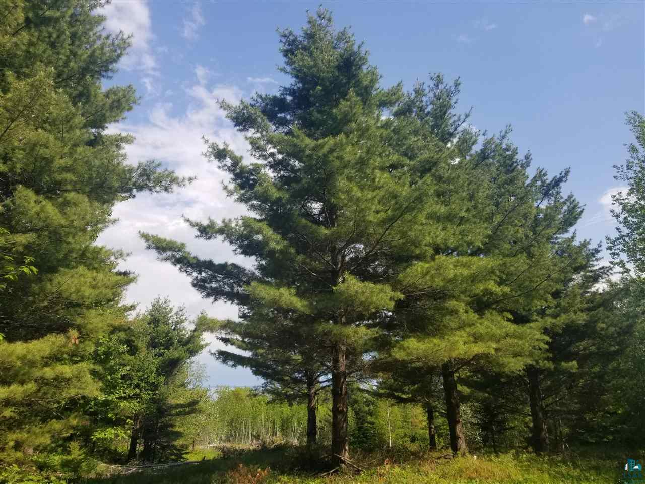 Lot 12 Towering Pines