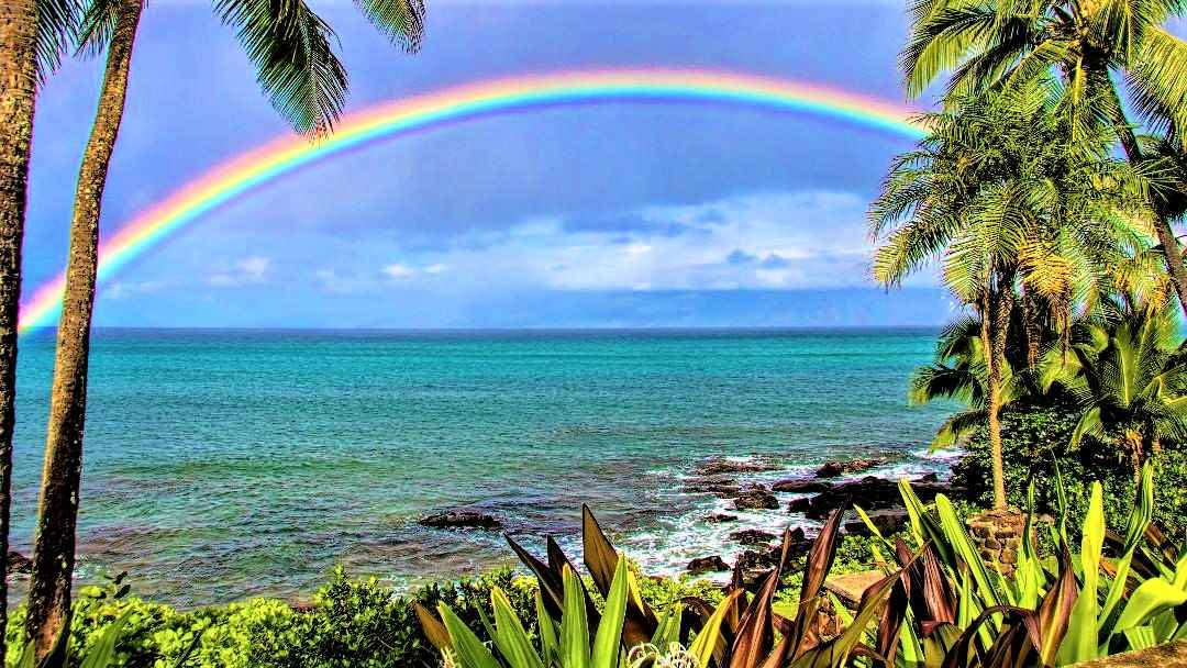 Rainbows and turtles from your backyard!