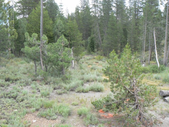 Additional photo for property listing at 11351 Highway 89 Truckee, California 96161 Estados Unidos