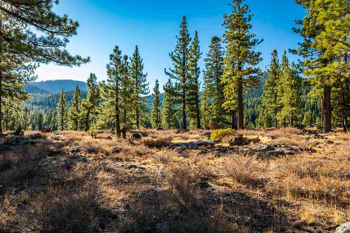 Land for Active at 8155 Valhalla Drive Truckee, California 96161 United States
