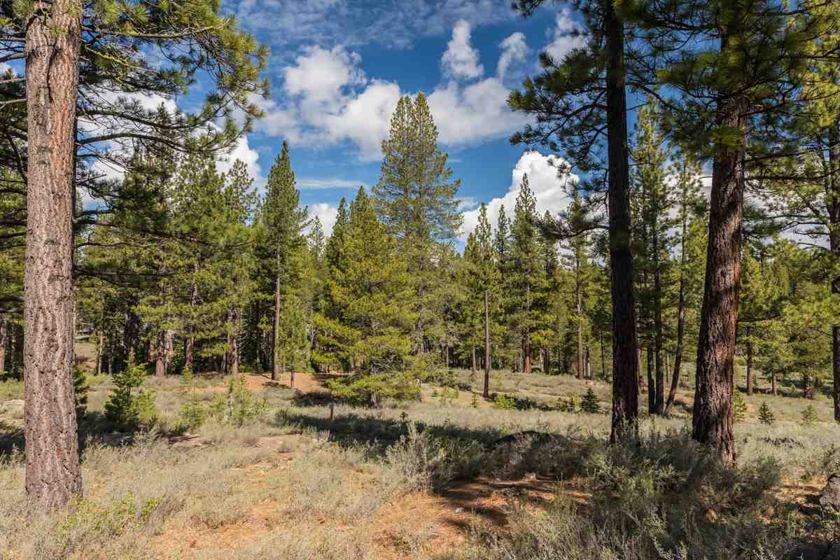 Additional photo for property listing at 8125 Villandry Drive Truckee, California 96161 United States
