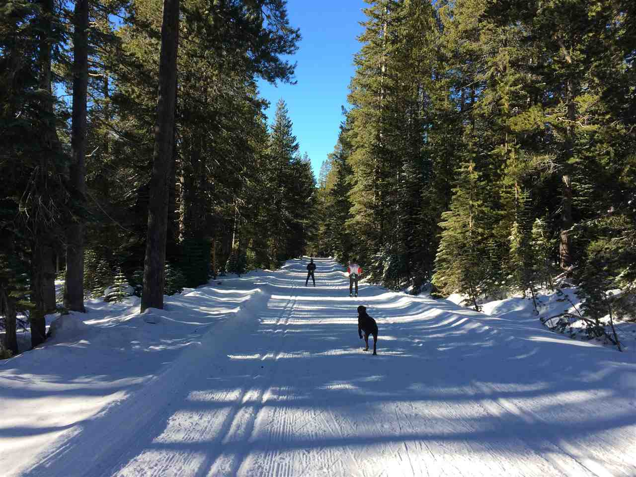 Land for Active at Old Donner Summit Road Truckee, California 95724 United States