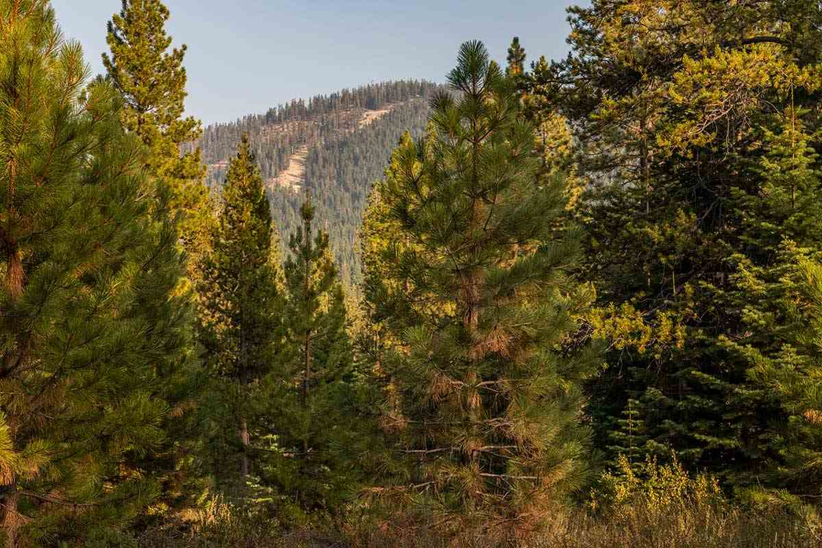 Land for Active at Corner lot 390 Schroeder Way Truckee, California 96161 United States